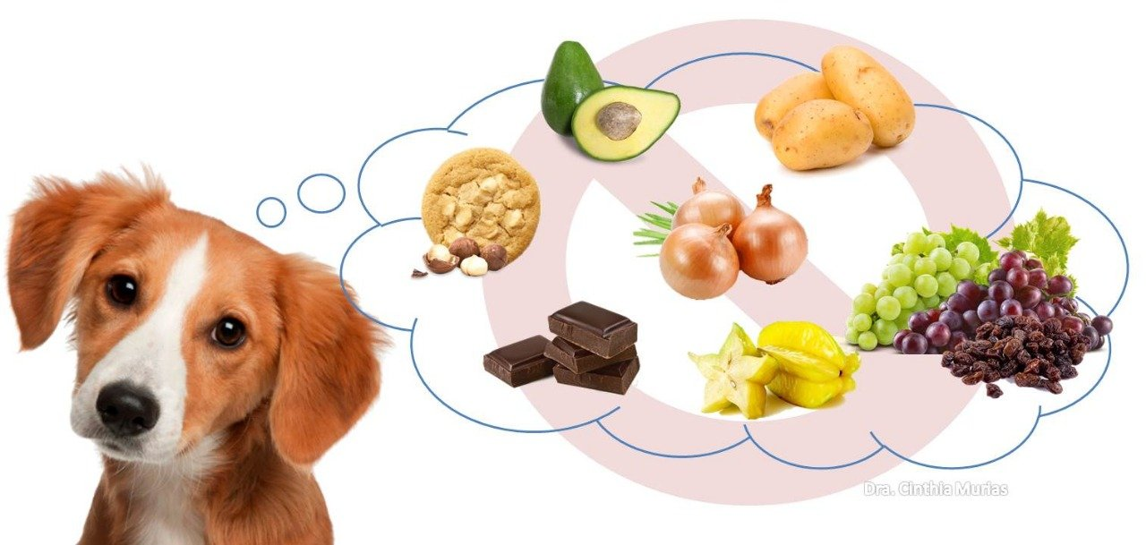 É preciso ficar atento aos alimentos prejudicais para os animais