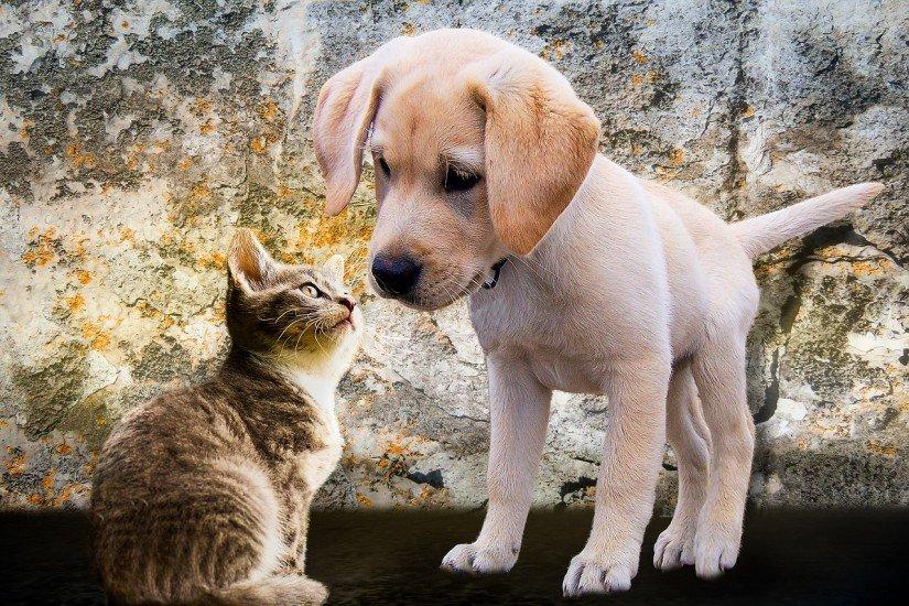 Prêmio destaca as cidades que se destacam no manejo humanitário de cães e gatos.