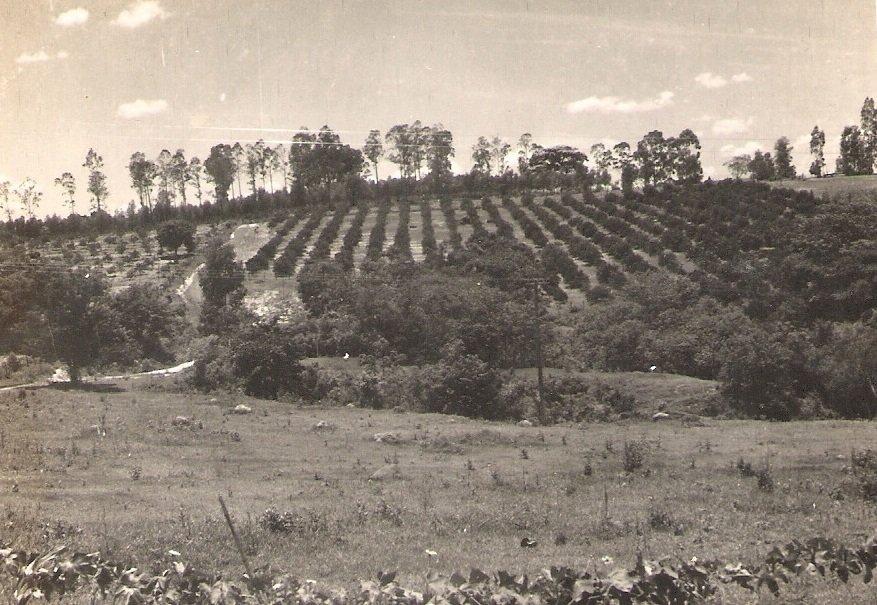 Sítio Santa Cruz, no ano de 1966, da Família Baldassin. Atualmente, parte do sítio ainda existe, mas o restante da terra se transformou em vários bairros, entre eles, Bela Vista II, São Francisco, Jardim Venturini e o Parque Luiz Barbosa