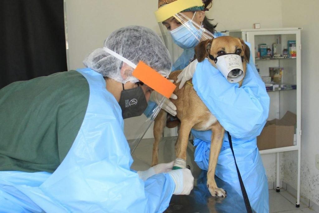 Saúde terá acesso as informações de todos os cães e gatos existentes no município (Foto Ivair Oliveira)