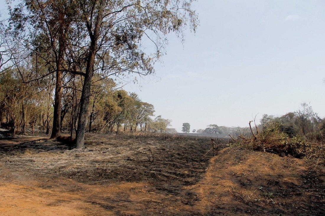 Queimadas deixam um rastro de destruição em Jaguariúna (Foto Ivair de Oliveira)