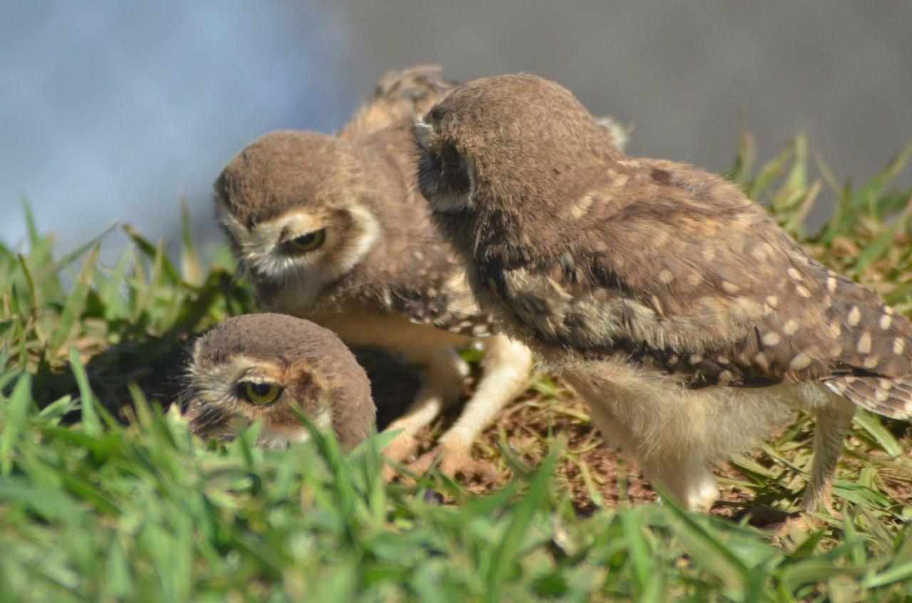 O cuidado com os filhotes em cena cercada de amor (foto Gislaine Mathias)