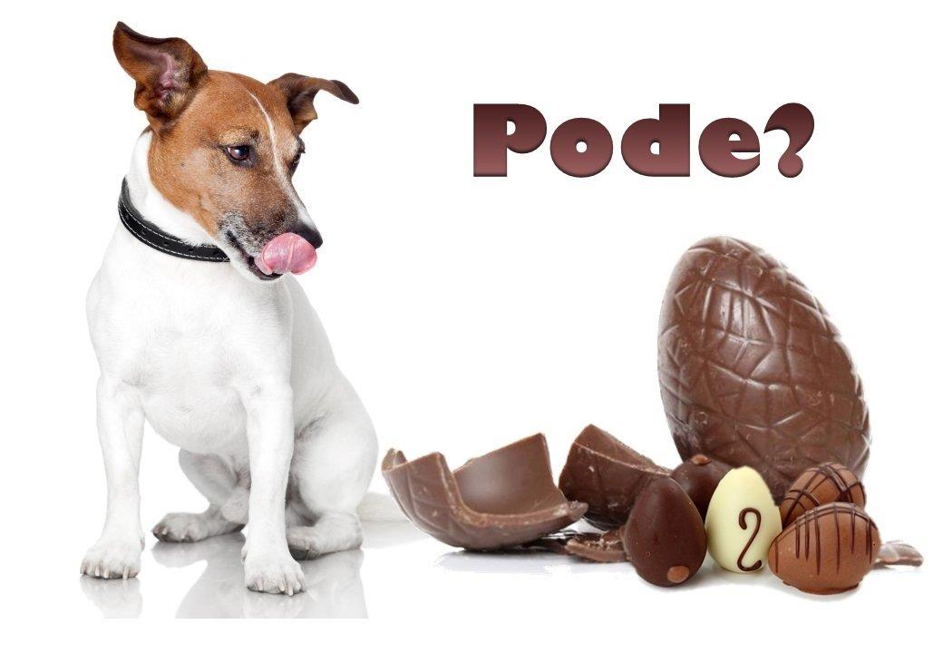 O chocolate pode matar o animal, então, não é aconselhável dar chocolate para cães e gatos